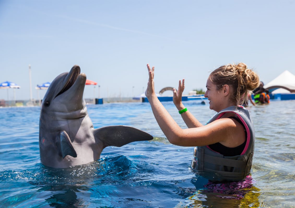 Marineland dolphin adventure in St Augustine, Florida